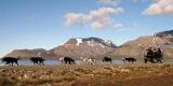 Også på sommeren kan man kjøre hundeslede på Svalbard i Adventdalen