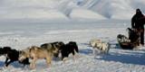 Flerdagsturer med hundeslede på Spitsbergen